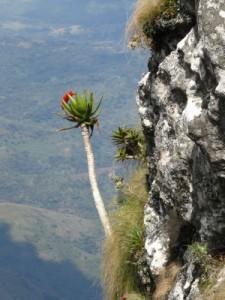 Photo of Mt Namuli Courtesy of Renata Jagustovic