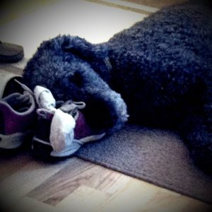 2poodle and shoes