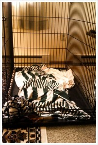 Rehab: Yes, that is a Zeebra in the crate