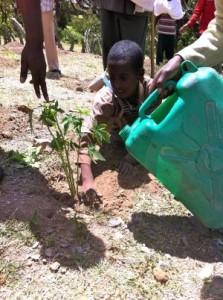 Mango Tree Planting at Laelay Wukro School Grounds