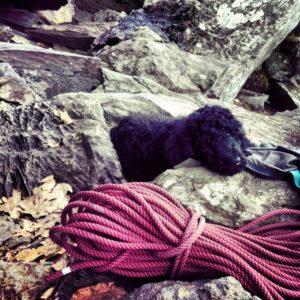 Crag Dog