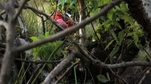 Majka climbing through the first crux: a tree. Photo by P. Yoo